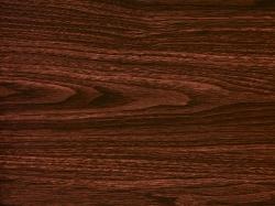 Кедр красный - 100 см